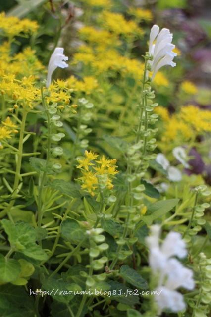 南側日蔭花壇