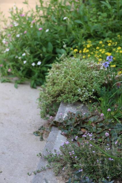 ロング花壇