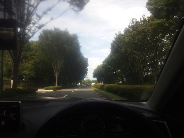 立川警察前の並木道