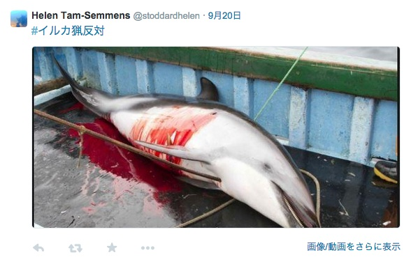 イルカ 事故