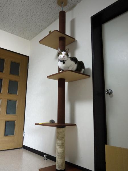 つっぱり式キャットタワー