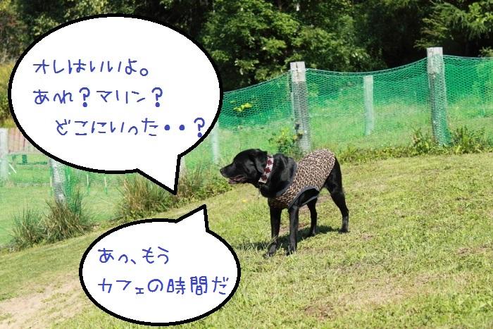 20140924-012.jpg