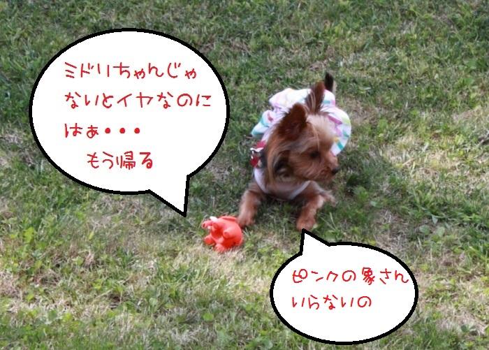 20140924-018.jpg