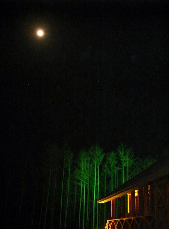 夜のラーチ