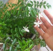 アロマサロンかおりの樹-DSC_0124-1-3.jpg