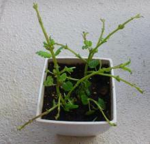 アロマサロンかおりの樹-DSC_0130-1.jpg