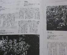 アロマサロンかおりの樹-DSC_0134-3.jpg