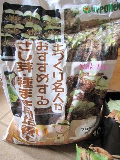 種蒔きの土