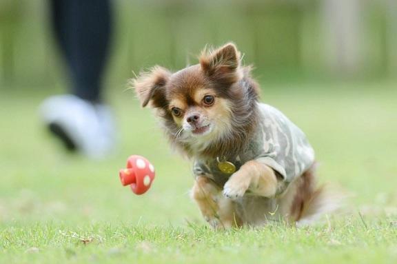 愛犬撮影会1