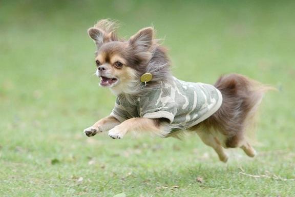 愛犬撮影会5