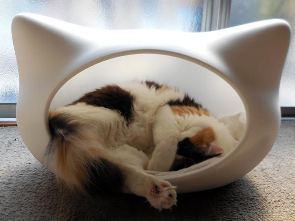 猫かまくら
