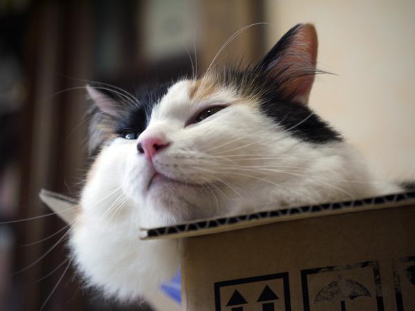 小箱好き♡