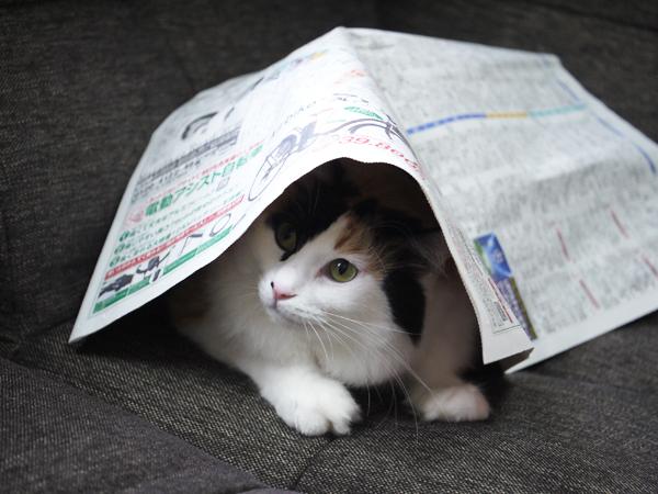 新聞紙かぶり