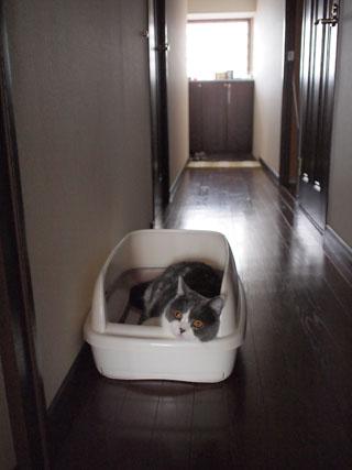 新しいベッドありがと