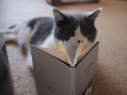 それが猫のお仕事ですから!