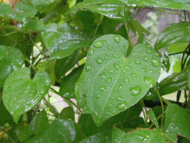 雨が降ってる