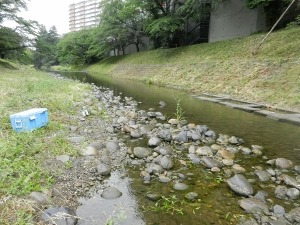 1 放流する川