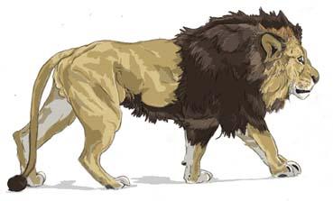 ライオン横断