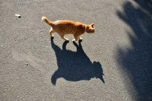 影猫 Cat and Its Shadow