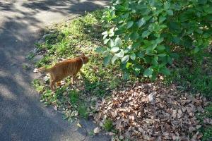 Cat Walking Toward The Bush