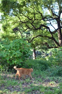 Cat and Greenery