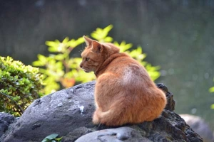 Cat On The Stones