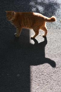 Cat Half Shade Half Sun