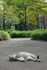 September Cat Lying
