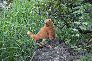 Cat Smelling Tree