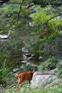 Cat Walking By The Pond