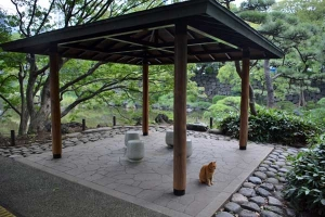 Cat in Weather Shelter