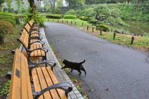 Park Cats After The Rain