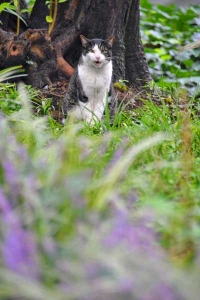 Cat and Lilyturf