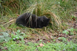 Cat Sitting In The Wet Grass