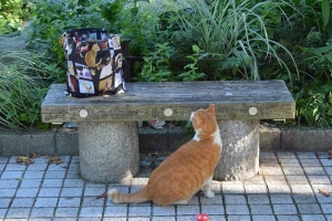 Real Cat and Cat Photo Bag