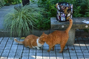 Real Cats and Cat Photo Bag