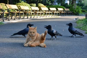 Park Cat and Crows