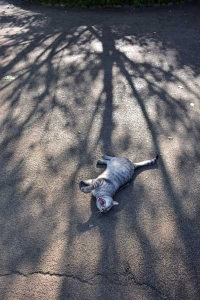 Cat and Tree Shadows