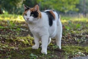 Sakura-chan The Cat - Careful and Watchful
