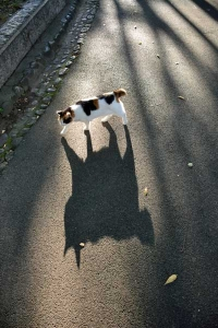 Sakura-chan The Cat and Her Shadow