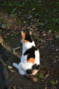 Sakura-chan The Cat From Behind