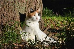 Sakura-chan The Cat In The Sun