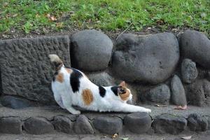 Sakura-chan The Cat Stretching