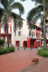 Singapore Street Cat