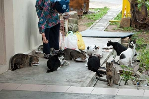 Singapore Cats and Feeder