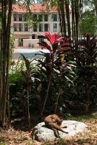 Singapore Outdoor Cat