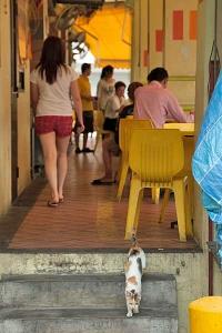 Singapore Coffee Shop Cat
