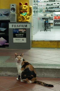 Singapore Begging Cat and Real Cat
