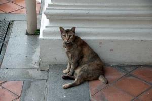 Singapore Shophouse Cat