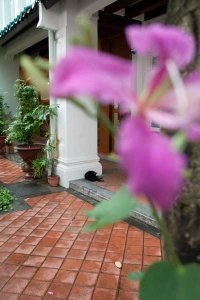 Singapore Shophouse Cat (very small)